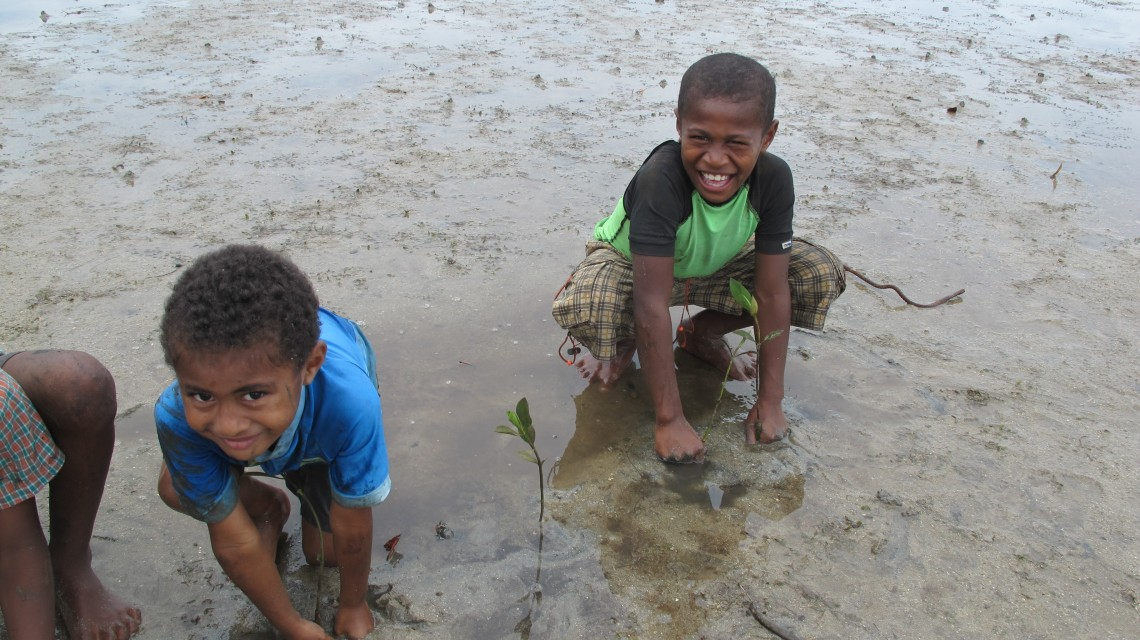 Replanting mangrove trees